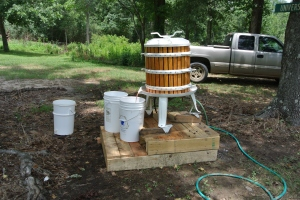 Pressing grapes for wine, photo by Dr. Wayne Adams